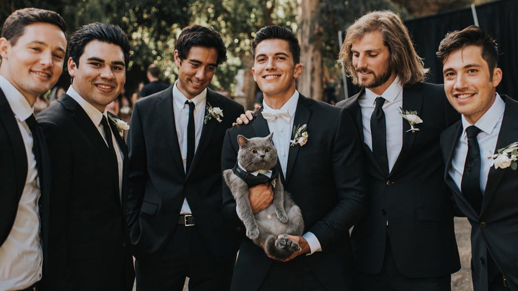 Cat becomes Best Man